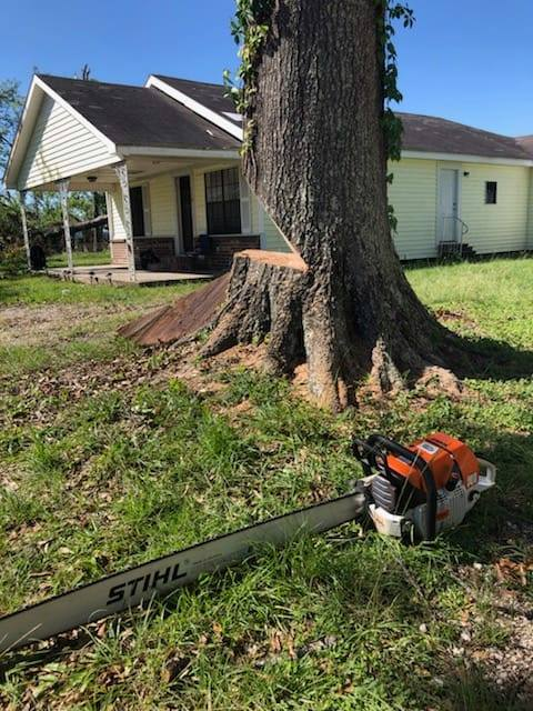 lodi tree removal