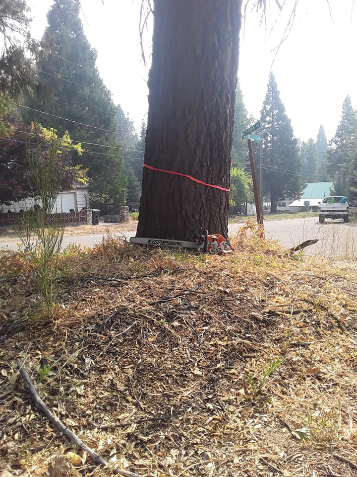 Tree service lodi