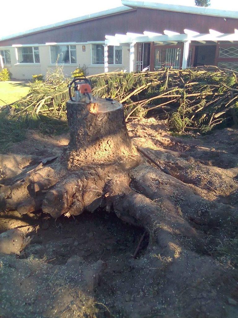 Lodi CA in Tree Cutting